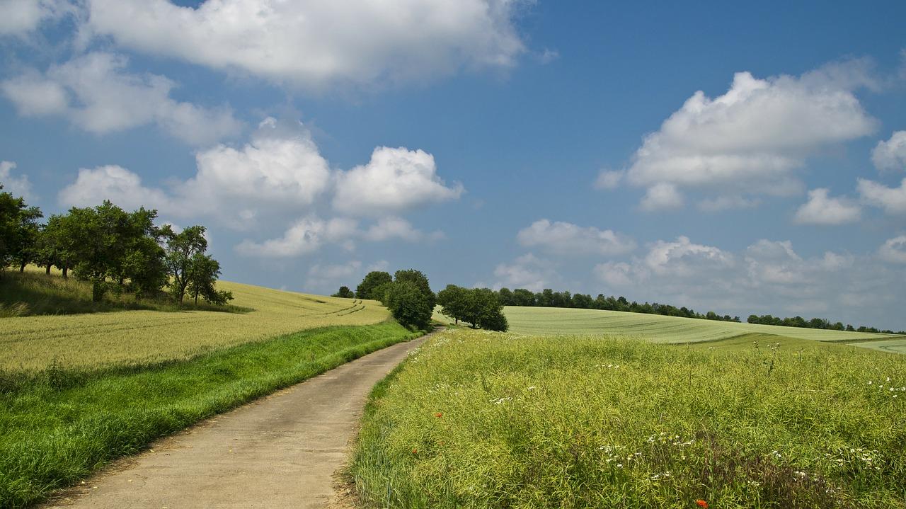 OGŁOSZENIE o przetargu na dzierżawę i najem nieruchomości