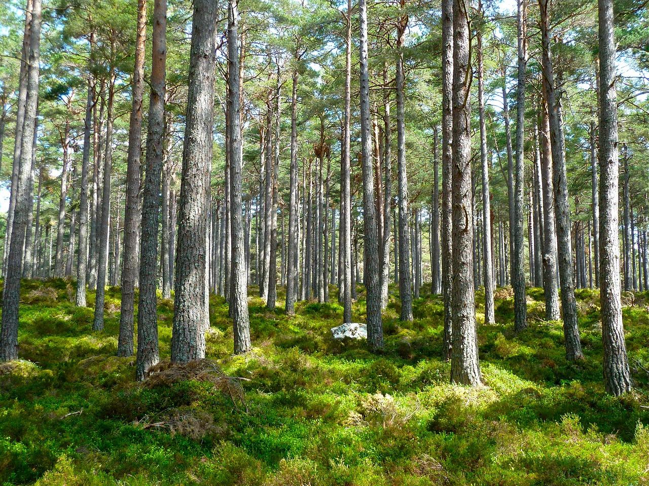 Harmonogram wyznaczania drzew do wycięcia: kwiecień – maj