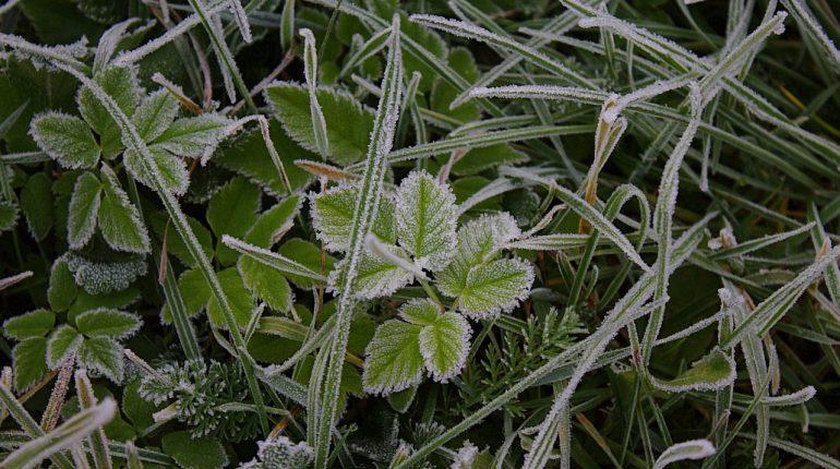 grass-2198904_1280