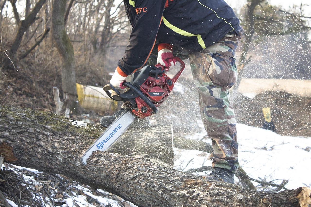 HARMONOGRAM wyznaczania drzew do wycięcia: Luty – Marzec 2018
