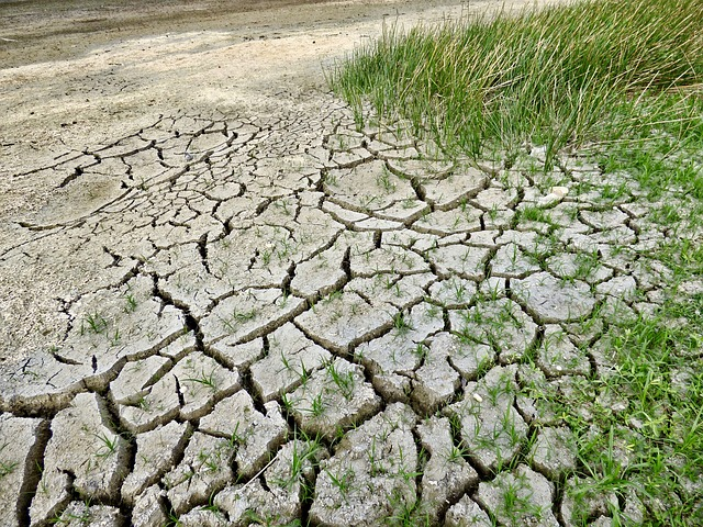 Pomoc klęskowa dla rolników. Nabór wniosków w ARiMR