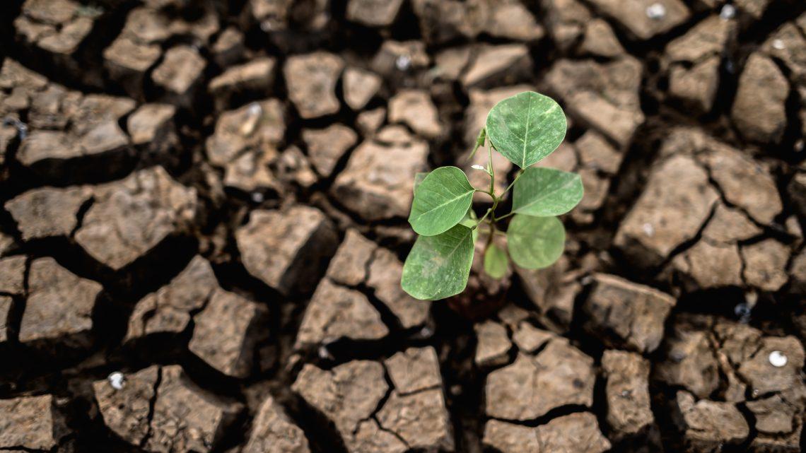 Wnioski o pomoc dla rolników za straty z 2020 r. – ARiMR