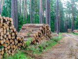 Harmonogram wyznaczania drzew do wycinki – październik – listopad 2021