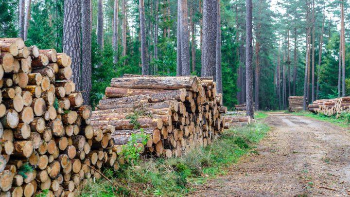 Harmonogram wyznaczania drzew do wycinki – sierpień – wrzesień 2021