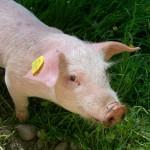 piggy-1514324_1920
