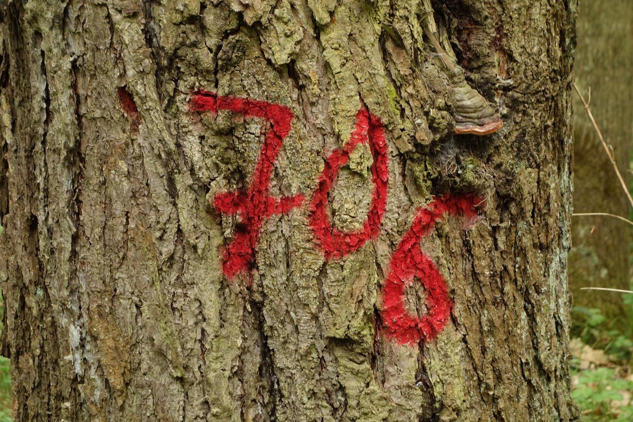 tree-538296_1280